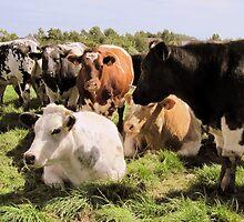 happy cows.... by Smaragd