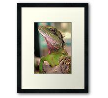 My little green friend! Framed Print