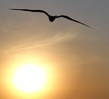 Exploding sun and bird - Sol explotando y ave by Bernhard Matejka