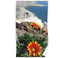 Flowers With A View Poster