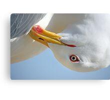 Seagull head Canvas Print