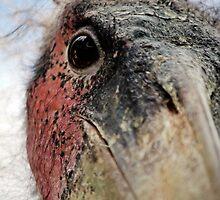 Marabou Stork by Mauro Rodrigues