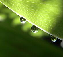 rain by Floralynne