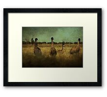 So Why Did the Emu Cross the Road?.... Framed Print