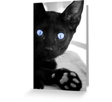 Black cat with blue eyes Greeting Card