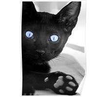 Black cat with blue eyes Poster