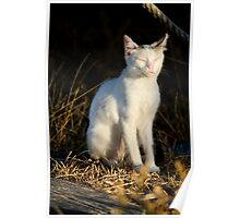 beautiful domestic cat Poster