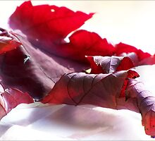 Leaf by saripin