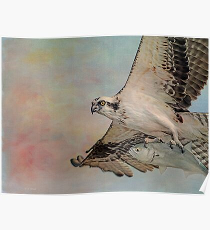 Osprey and Fish Poster