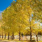 Oak Glen Golden by Judylee