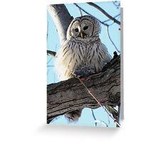Adorable Barred Owl With Prey Greeting Card