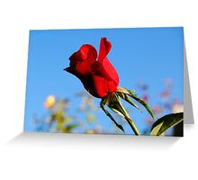 Morning Rose Greeting Card