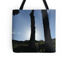 Cypress Tree Sunset Tote Bag