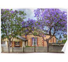 Jacarandas - McHenry Street, Murray Bridge, South Australia Poster