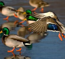 Why Walk When You Can Fly by Jeff Weymier