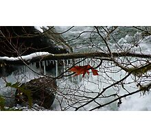 Winter on the North Fork of the Nooksack Photographic Print