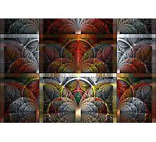 Splits-Crop Combo # 1 Photographic Print