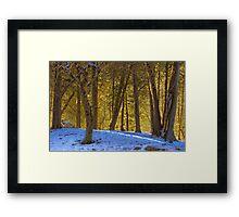 Snowy Glade Framed Print