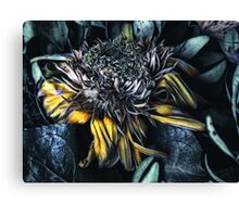 death of a flower Canvas Print