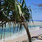tweed coast beaches ... by gail woodbury
