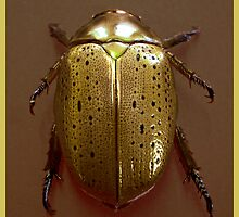 Christmas Beetle by Donuts