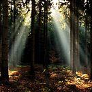 An autumnal light dream memory by jchanders