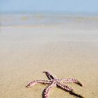 Starfish by darkmoda
