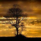 Sunset tree by darkmoda