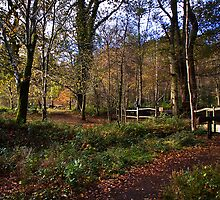 Forest Footpath by Country  Pursuits