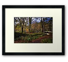 Forest Footpath Framed Print