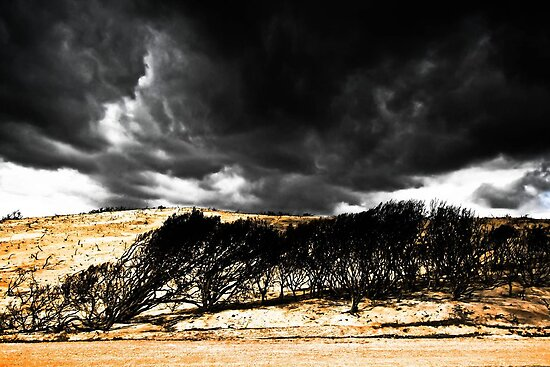 After the Bushfires by Jill Fisher