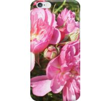 Edinburgh Rose iPhone cover  iPhone Case/Skin