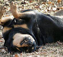 Let Sleeping Dogs Lie by Carolyn  Fletcher