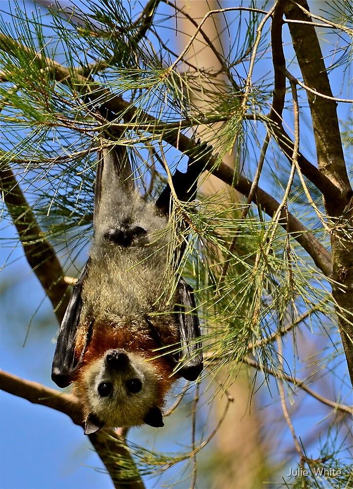 Hanging Around. by Julie  White