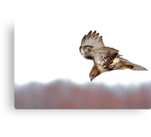 Supper Spotted - Red-tailed Hawk Canvas Print