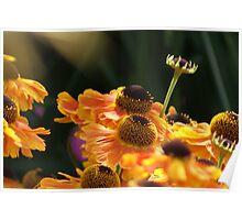 Sunshine - Sneezweed Poster