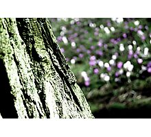Abstract Tree & Flowers Photographic Print