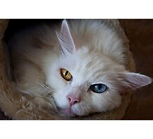 Beautiful White Cat, Two Colored Eyes Photographic Print