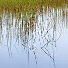 Reeds and reflections, Priddy Pool, Somerset, UK - 103 views 10/04/12 by Robert Down