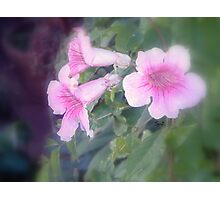 Pink bells Photographic Print