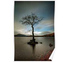 Milarrochy Tree (1) Poster