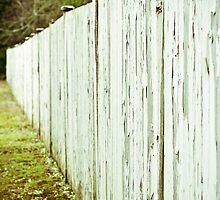 An Appealing Fence-7 by ScaredylionFoto