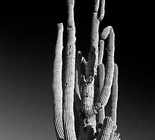 Giant Saguaro Cactus Portrait in Black and White by Bo Insogna