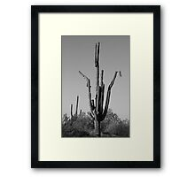 Saguaro Cactus Doing The Crane Framed Print