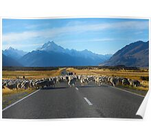 High Country Sheep Farming Poster