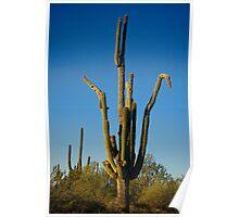 Saguaro Doing the Crane  Poster
