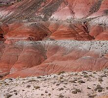 The Painted Desert  8020 by Bo Insogna