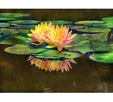 The Beauty of Water Lilies Photographic Print