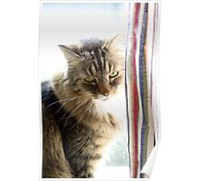 Curtain Kitty Poster