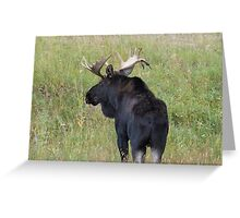 Bull Moose in Colorado Greeting Card